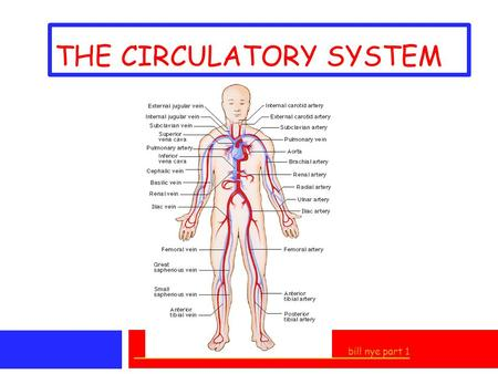 THE CIRCULATORY SYSTEM bill nye part 1. I. TRANSPORTATION SYSTEM * delivers OXYGEN to cells (RBC'S) * removes CARBON DIOXIDE * transports NUTRIENTS to.