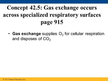 Gas exchange supplies O2 for cellular respiration and disposes of CO2