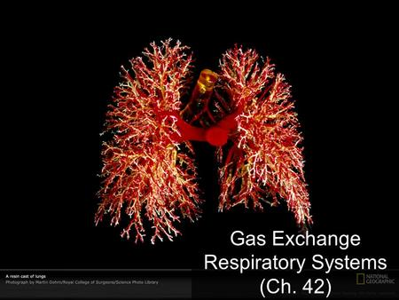 Gas Exchange Respiratory Systems (Ch. 42) Why do we need a respiratory system? O2O2 food ATP CO 2 respiration for respiration Need O 2 in – for aerobic.