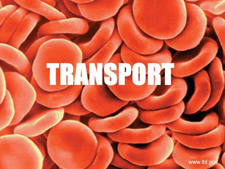 TRANSPORT www.lbl.gov. Adaptations for Transport TRANSPORT: It is the process by which substances move into or out cells or are distributed within cells.
