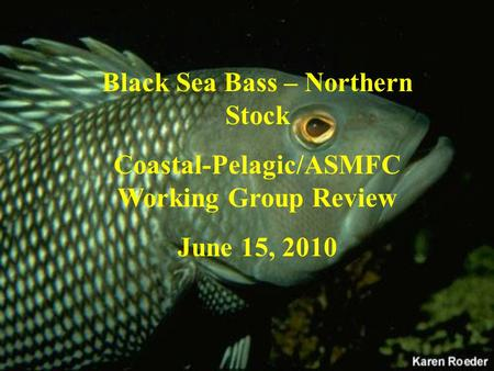 Black Sea Bass – Northern Stock Coastal-Pelagic/ASMFC Working Group Review June 15, 2010.