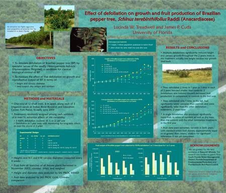 Effect of defoliation on growth and fruit production of Brazilian pepper tree, Schinus terebinthifolius Raddi (Anacardiaceae) Lucinda W. Treadwell and.