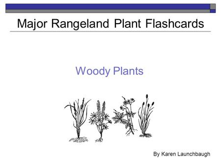 Woody Plants Major Rangeland Plant Flashcards By Karen Launchbaugh.
