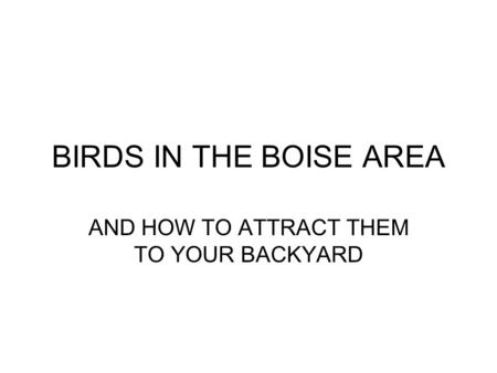 BIRDS IN THE BOISE AREA AND HOW TO ATTRACT THEM TO YOUR BACKYARD.