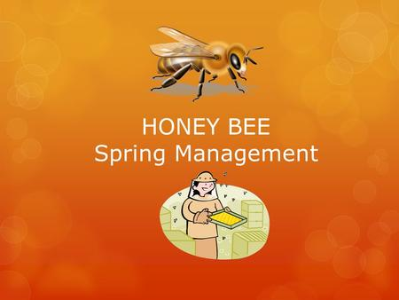 HONEY BEE Spring Management. Spring Management  One of the most important things you will do to determine if you have a honey crop or …… not !