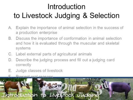 Introduction to Livestock Judging & Selection