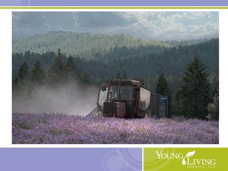 05/16/10. Young Living 15 Essential Oil blends Supporting spirituality and self-development.