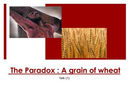 The Paradox : A grain of wheat Talk (1). A grain of Wheat  Most assuredly, I say to you, unless a grain of wheat falls into the ground and dies, it remains.