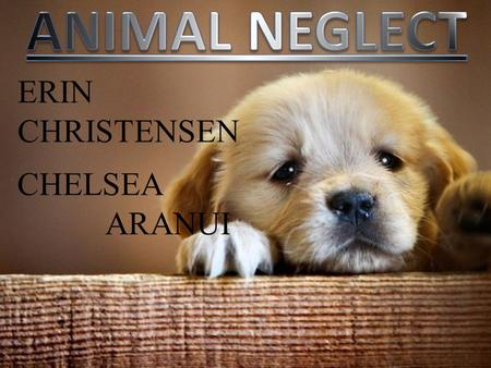 ERIN CHRISTENSEN CHELSEA ARANUI. INTRODUCTION Today we will talk about Cases of animal neglect in New Zealand How the animal has been neglected Consequences.