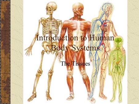 Introduction to Human Body Systems The Tissues. Levels of Organization Molecules (like DNA and proteins) Organelles Cells Tissues Organs Organ Systems.