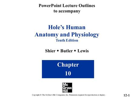 PowerPoint Lecture Outlines to accompany Hole's Human Anatomy and Physiology Tenth Edition Shier  Butler  Lewis Chapter 10 Copyright © The McGraw-Hill.