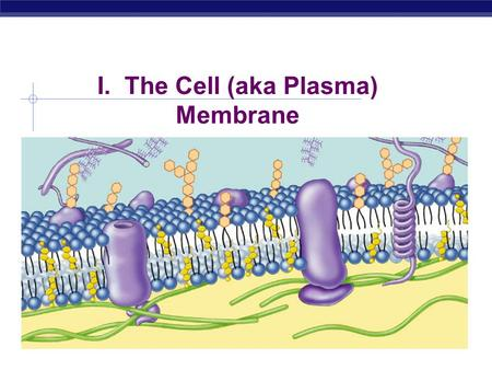 I. The Cell (aka Plasma) Membrane Overview  Cell membrane separates living cell from nonliving surroundings  Controls traffic in & out of the cell.