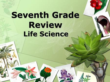Seventh Grade Review Life Science. Living organisms require food, water, shelter, energy, and space to survive.