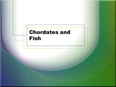 Chordates and Fish. Chordates 45,000 members Must have the following dorsal nerve chord – vertebrae cranium – skull endoskeleton of bone or cartilage.