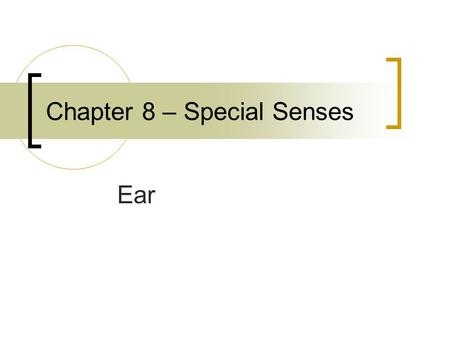 Chapter 8 – Special Senses Ear. Outer Ear Pinna – aka auricle – ear lobe External acoustic meatus (external auditory canal)  About 1inch long and ¼ inch.