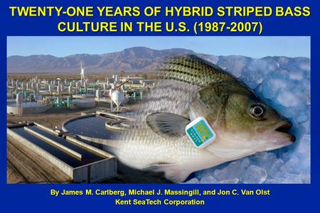 TWENTY-ONE YEARS OF HYBRID STRIPED BASS CULTURE IN THE U.S. (1987-2007) By James M. Carlberg, Michael J. Massingill, and Jon C. Van Olst Kent SeaTech Corporation.