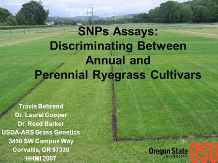 SNPs Assays: Discriminating Between Annual and Perennial Ryegrass Cultivars Travis Behrend Dr. Laurel Cooper Dr. Reed Barker USDA-ARS Grass Genetics 3450.