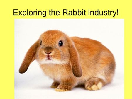 Exploring the Rabbit Industry!. Next Generation Science/Common Core Standards Addressed! RST.11 ‐ 12.7 Integrate and evaluate multiple sources of information.