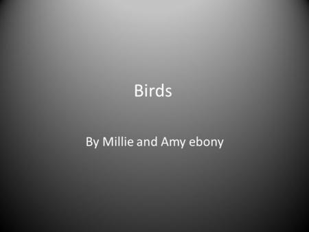 Birds By Millie and Amy ebony. Video of birds flying and eating.