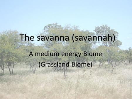 The savanna (savannah) A medium energy Biome (Grassland Biome)