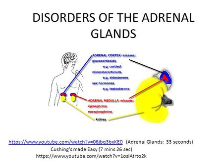 DISORDERS OF THE ADRENAL GLANDS https://www.youtube.com/watch?v=06jbq3bxKE0 (Adrenal Glands: 33 seconds)https://www.youtube.com/watch?v=06jbq3bxKE0 Cushing's.