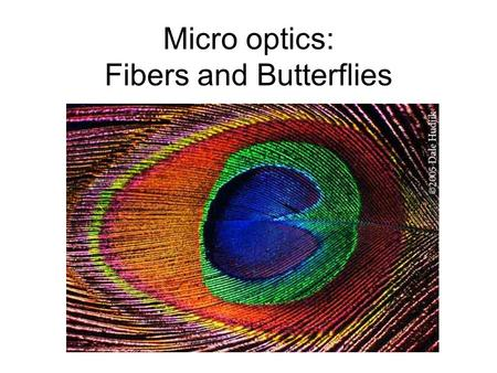 Micro optics: Fibers and Butterflies. Total internal reflection.