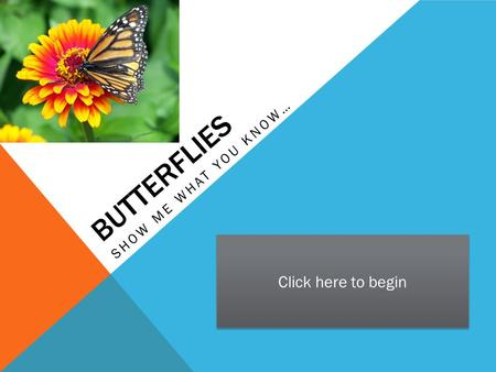 BUTTERFLIES SHOW ME WHAT YOU KNOW… Click here to begin.