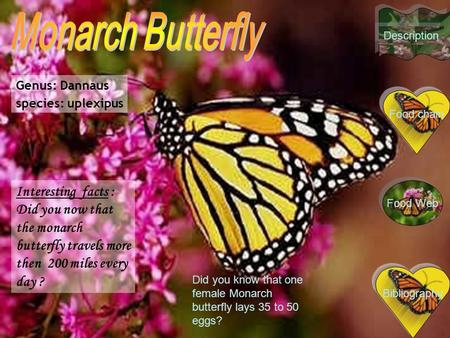Genus: Dannaus species: uplexipus Interesting facts : Did you now that the monarch butterfly travels more then 200 miles every day ? Bibliography Did you.