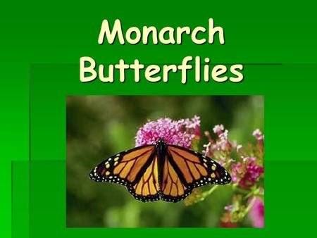 Monarch Butterflies Objectives  You will know the life cycle of the monarch butterfly.  You will know the body parts of the monarch butterfly.  You.