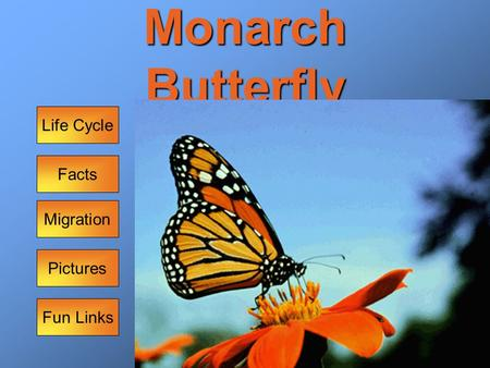 Monarch Butterfly Facts Life Cycle Pictures Migration Fun Links.