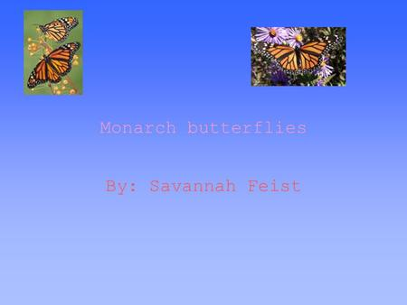 Monarch butterflies By: Savannah Feist. Thesis Statement The milkweed plant helps the monarch butterfly fly gracefully as they migrate.