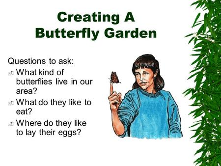 Creating A Butterfly Garden Questions to ask:  What kind of butterflies live in our area?  What do they like to eat?  Where do they like to lay their.