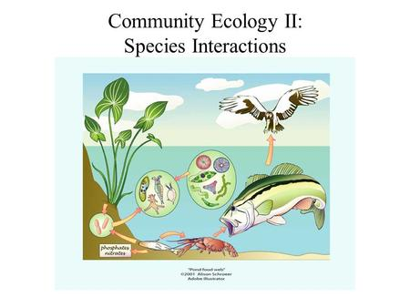Community Ecology II: Species Interactions. Ecological communities: Assemblages of two or more species living and interacting in the same area. Species.