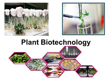 Plant Biotechnology Humans have been improving crop plants through selective breeding for a long time Plant biotechnology allows scientists to transfer.