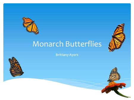 Monarch Butterflies Brittany Ayers. What do They Eat?  Milkweed  Nectar  Water.