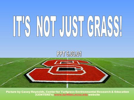 Picture by Casey Reynolds, Center for Turfgrass Environmental Research & Education (CENTERE's) www.turffiles.ncsu.edu websitewww.turffiles.ncsu.edu.