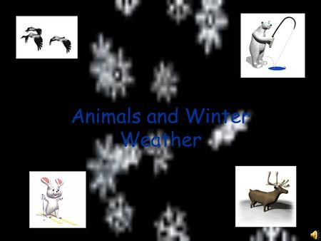 Animals and Winter Weather How do animals stay warm when winter weather comes? One way is to hibernate.