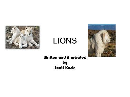 LIONS Written and illustrated by Scott Kosin. 2 Table Of Contents How much do females weigh? 3 How much do males weigh? 4 How big are it's teeth? 5 How.