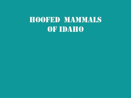 Hoofed Mammals of Idaho. Hoofed Mammals  Have hooves made of tough horn-like material  Another name for a mammal with hooves – ungulate  All hoofed.
