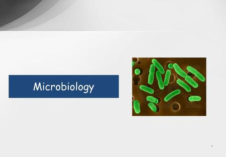 1 Microbiology. 2 Overview Lectures Study tips Syllabus Practical session Examinations.