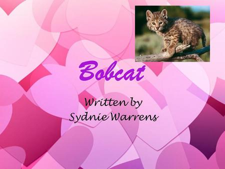 Bobcat Written by Sydnie Warrens Written by Sydnie Warrens.