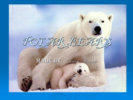 POLAR BEARS Made by : Carina Alvarado. Basic information on Polar Bears  The polar bear is a bear native to the Arctic Ocean and its surrounding seas.