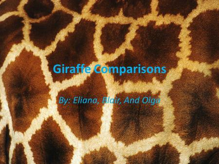 Giraffe Comparisons By: Eliana, Blair, And Olga. Pictures/Charts When you see this picture the information is about the White Giraffe in the book. When.