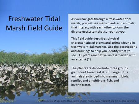 Freshwater Tidal Marsh Field Guide As you navigate through a freshwater tidal marsh, you will see many plants and animals that interact with each other.