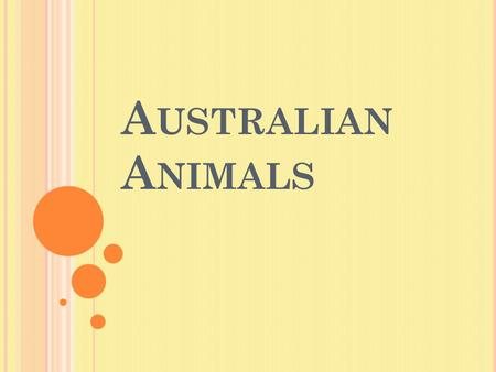 A USTRALIAN A NIMALS. T HIS ANIMALS LIVE IN A USTRALIA : Red kangaroo Koala Emu Platypus Australian Pelican Great White Shark Snake Nacked Turtle Dingo.