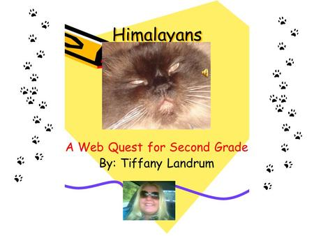 Himalayans A Web Quest for Second Grade By: Tiffany Landrum.