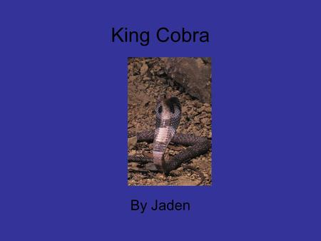 King Cobra By Jaden. Table of Contents 1food 2 Interesting facts 3 habitat 4 enemies 5 description 6 type of animal 7 communication 8 would this animal.