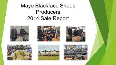 Mayo Blackface Sheep Producers 2014 Sale Report. 2014 Sale No EnteredNo SoldMinMaxAverage 17271575 Hoggets479378€85.00€170.00€123.10 Aged ewes548527€60.00€130.00€88.33.