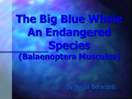 The Big Blue Whale An Endangered Species (Balaenoptera Musculus) By Nadia Berardelli.