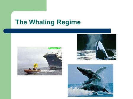 The Whaling Regime. Whaling Whale Products: – oil – whalebone and baleen – meat Whaling History – Vikings and Basques – 18th century: US and Britain largest.